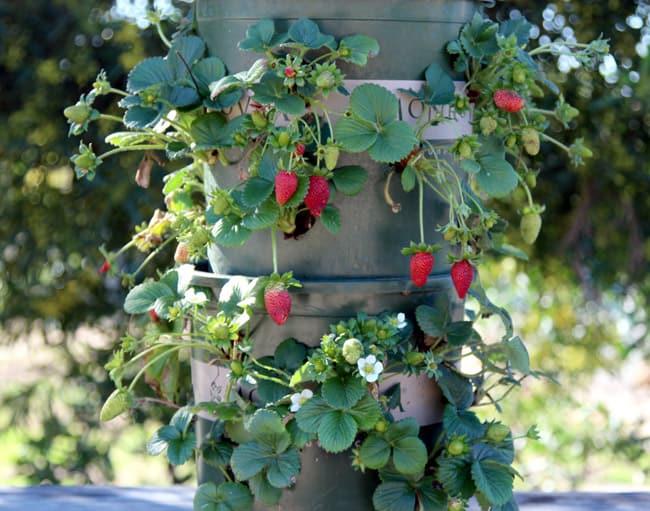 easy DIY strawberry tower