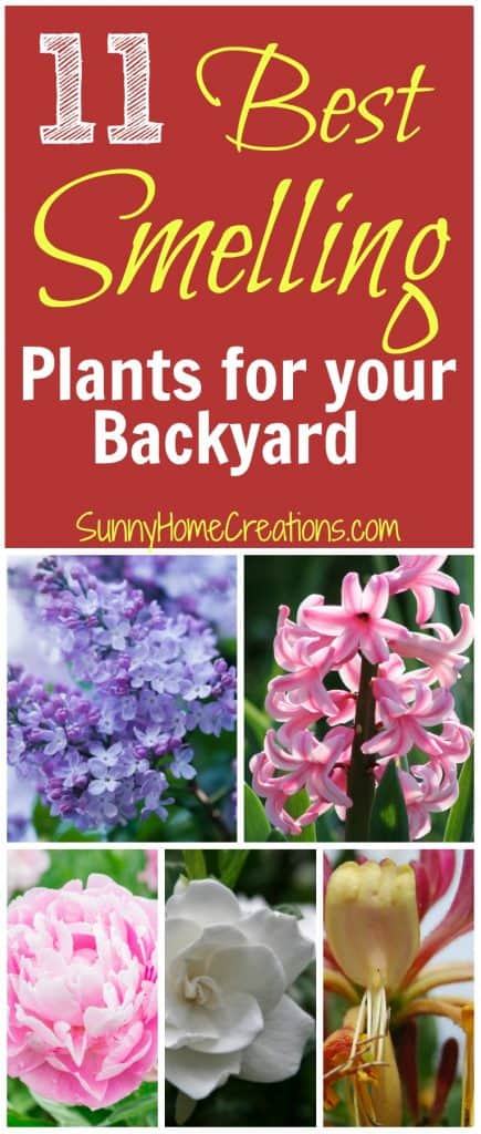 Best smelling Plants for your back and front yard. Add some of these to your landscape for an incredibly fragrant yard.