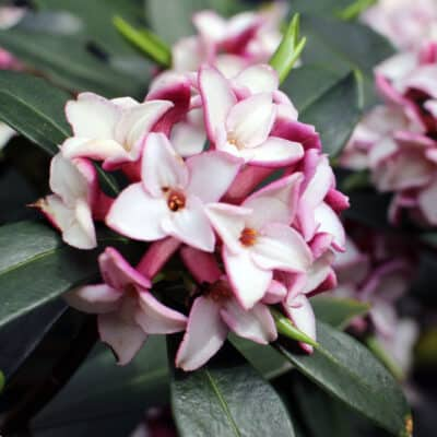 Best smelling plants for your yard