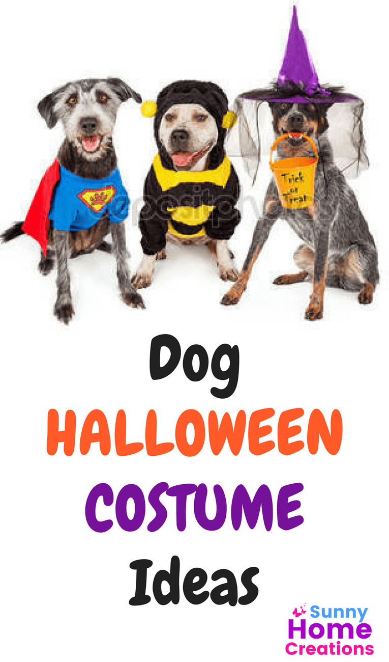 Dog Halloween Costume Ideas that you will Love (your dog too!)