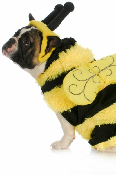 dog Dressed as bumblebee