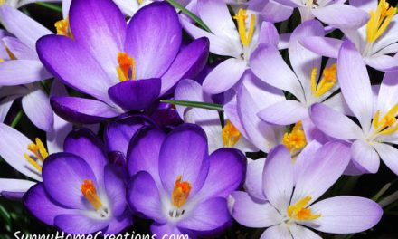 12 Best Bulbs to Plant in Fall for Spring Flowers