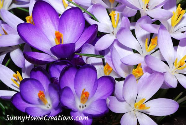 Best bulbs to plant in fall