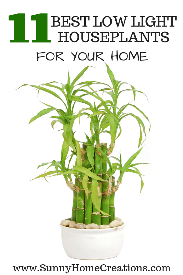 11 best low light houseplants for your home