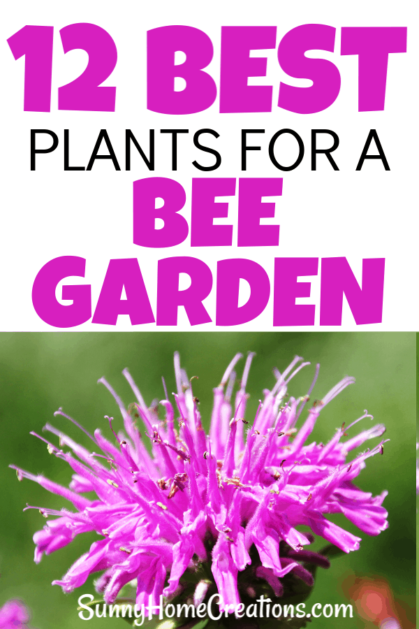 12 Best plants for a bee garden