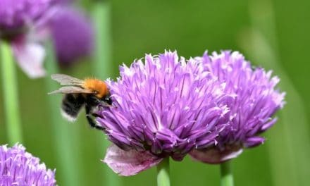 Best Bee Friendly Plants