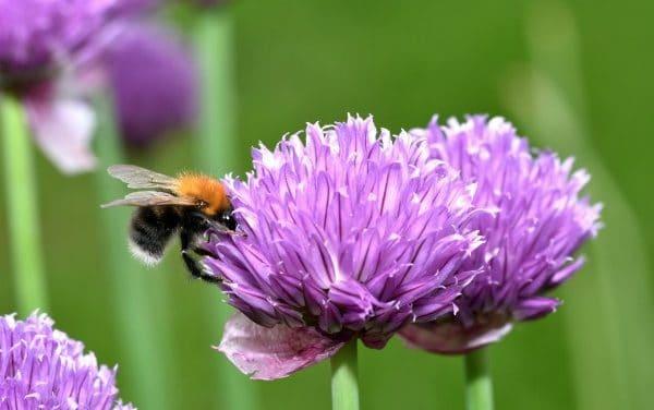Best Bee Friendly Plants