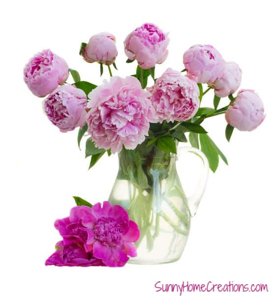 Beautiful Peony Flowers in Vase