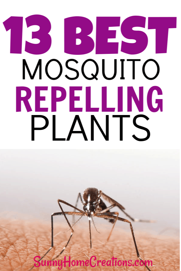 13 Best mosquito repelling plants for your backyard