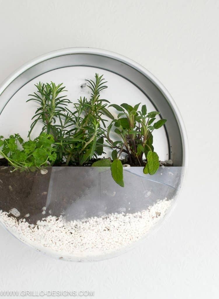 Cake Pan Herb Planter Vertical Gardening