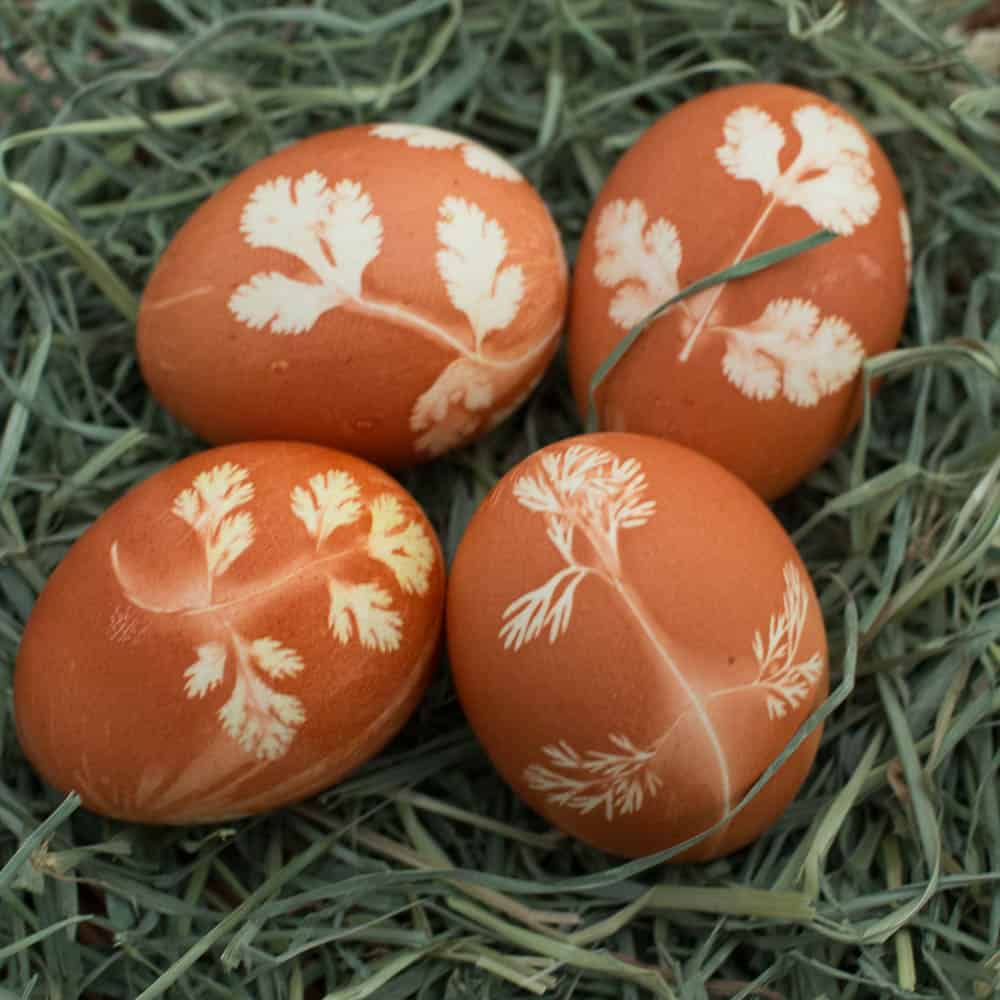Stenciled with herbs easter eggs