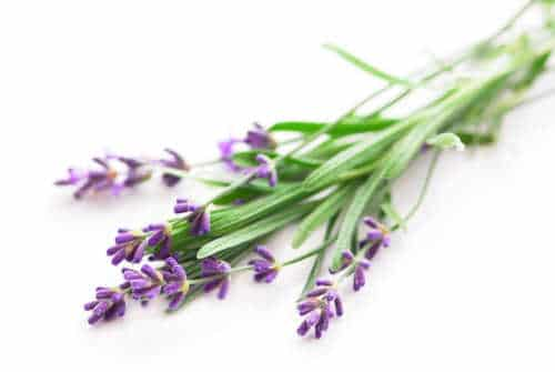 You can make jam from sprigs of lavender