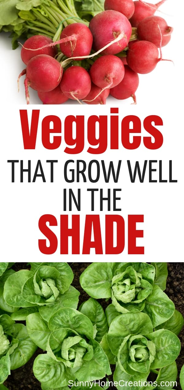 veggies that grow well in the shade