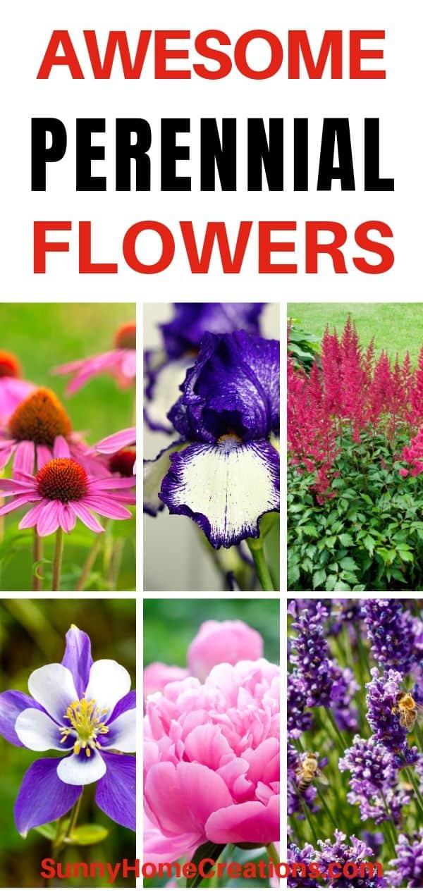 Summer Perennial Flowers
