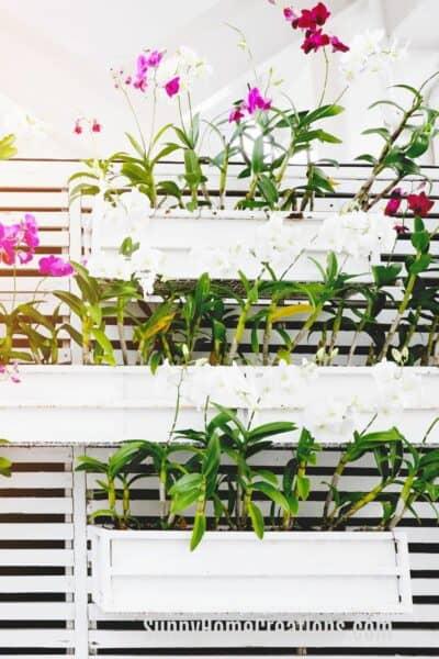 Best Plants for a Vertical Garden