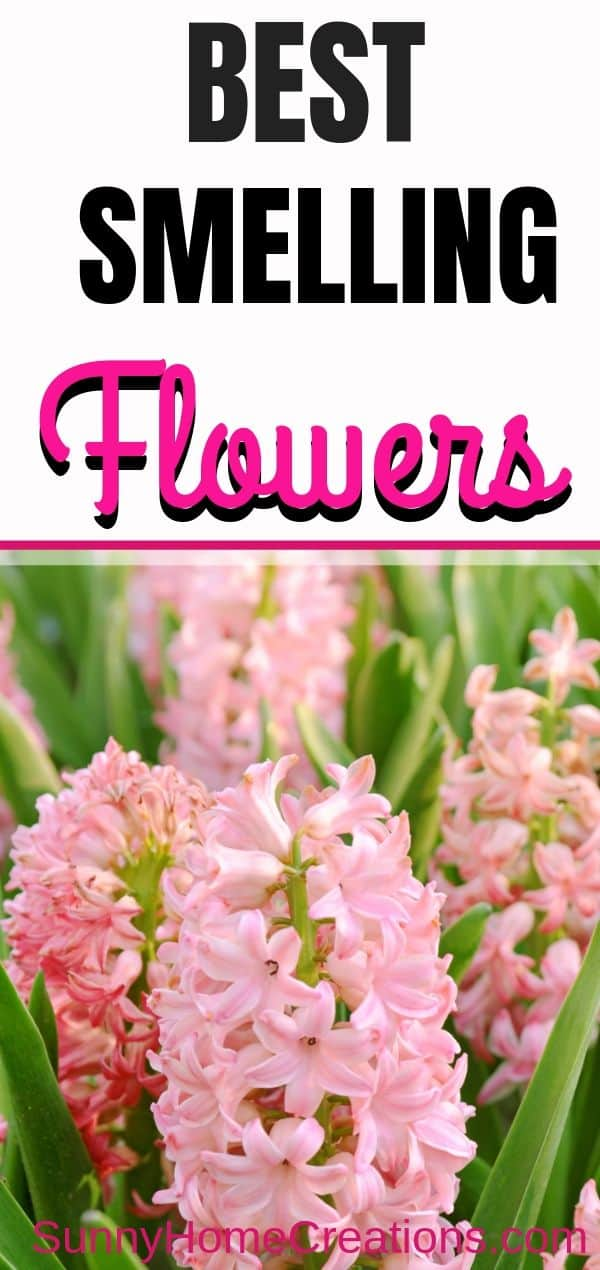 best smelling flowers - hyacinths