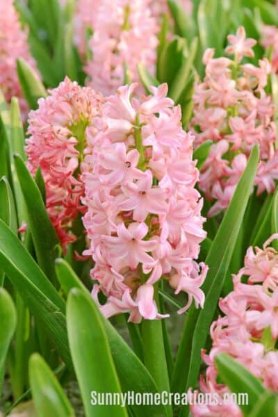 Most fragrant flowers