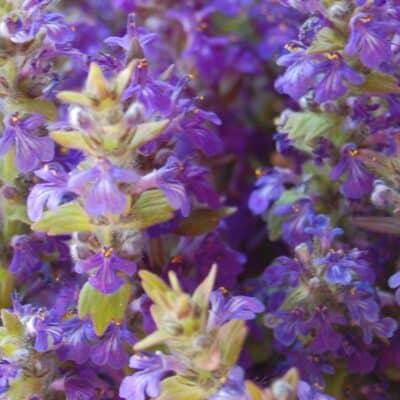 best medicinal herbs anyone can grow
