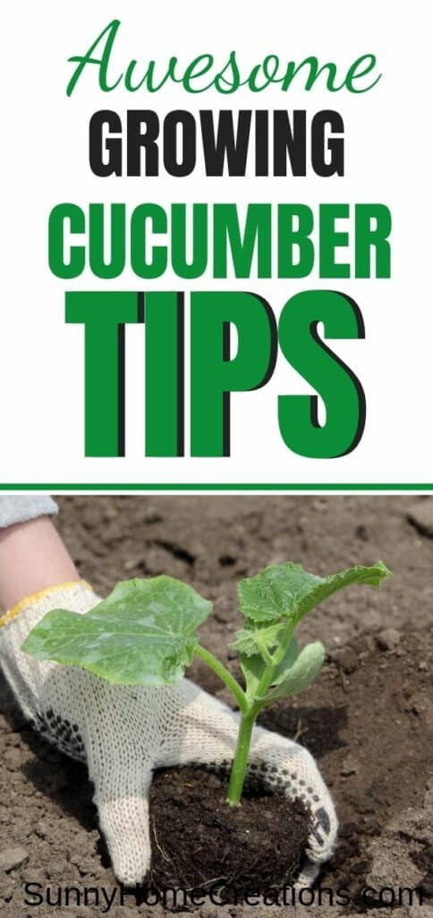 Awesome tips for growing cucumbers