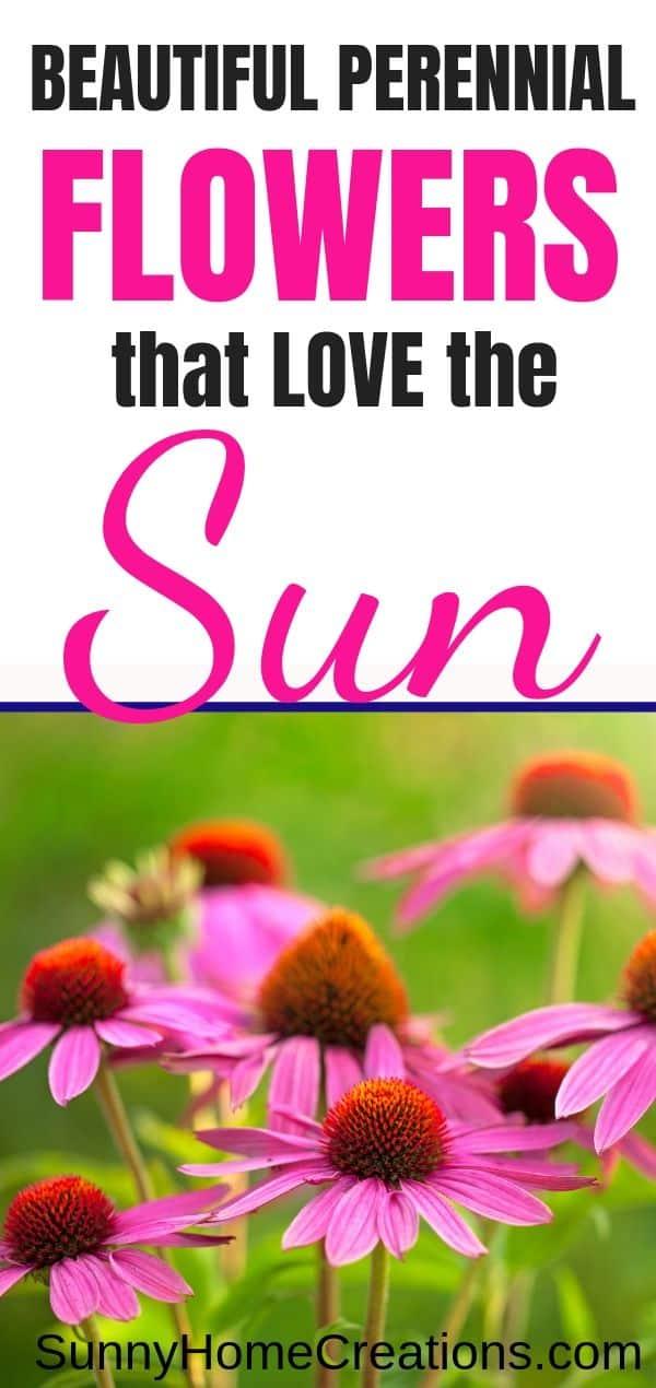 Beautiful Perennials that thrive in full sun