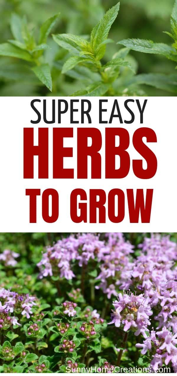 Easy Herbs Anyone Can Grow