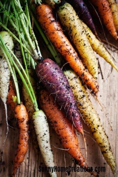Carrots for a Fall Veggie Garden