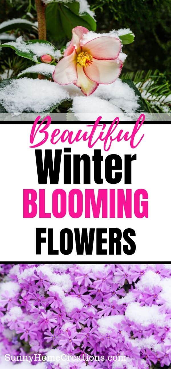 Beautiful Winter Blooming Flowers